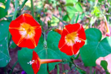 Rimrock Springs Pollinator Garden Project