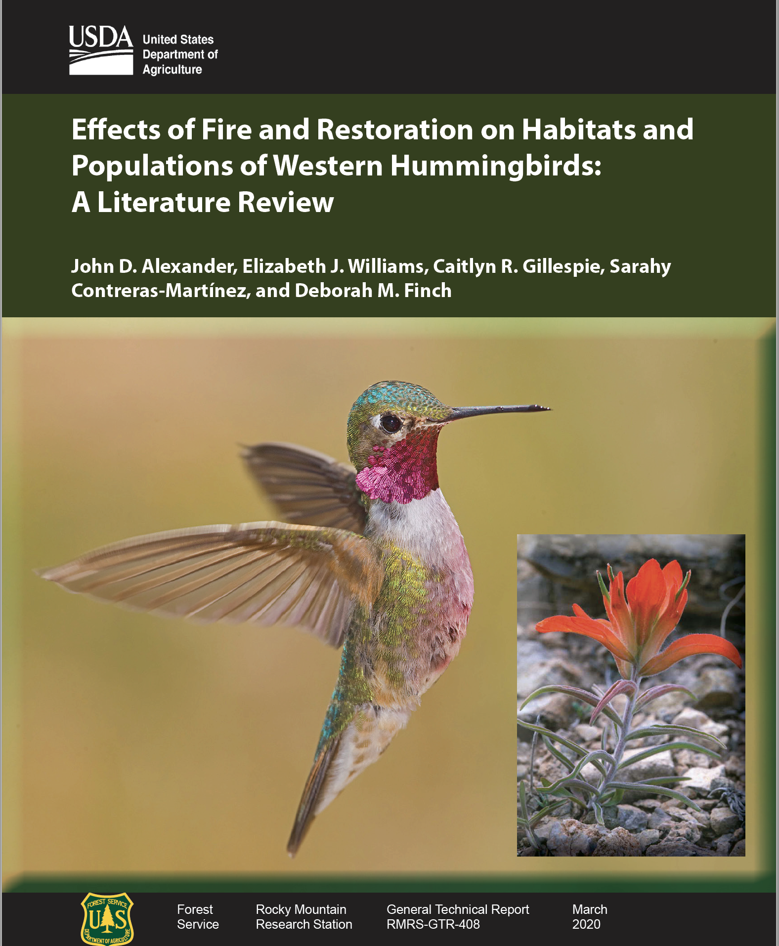 Hummingbirds & Fire: It's Complicated!